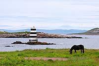 Saint Pierre et Miquelon - chevaux